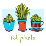 Hand-drawn pot plants. Colored sketch. Vector illustration. Three hand-drawn pot plants. Colored sketch. Vector illustration Royalty Free Stock Image