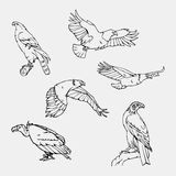 Hand-drawn potloodgrafiek Roofvogels reeks Stock Afbeelding