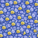 Hand-drawn primula seamless pattern Royalty Free Stock Photo
