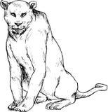 Hand drawn puma Royalty Free Stock Photos