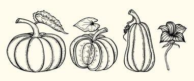 Hand Drawn Pumpkin Stock Photography