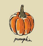 Hand drawn pumpkin Stock Photography