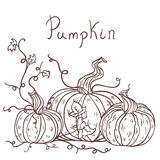 Hand drawn pumpkins Stock Image