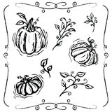 Hand-drawn pumpkins and vines royalty free illustration
