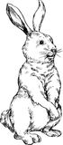 Hand drawn rabbit Stock Photography