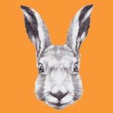 Hand drawn rabbit's head. Vector Royalty Free Stock Photos
