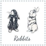 Hand drawn rabbits isolated on white. Vector art vector illustration