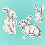 Hand drawn rabbits set. Easter bunnyes. Stickers set stock illustration