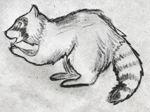 Hand drawn raccoon. Hand drawn pencil sketch of a raccoon eating something, side view Stock Image