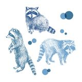 3 hand drawn raccoons. 3 colorful hand drawn raccoons. Vector illustration Royalty Free Stock Image