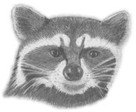 Hand-drawn racoon face Royalty Free Stock Images
