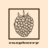 Hand drawn raspberry Royalty Free Stock Photo