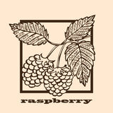 Hand drawn raspberry Royalty Free Stock Image