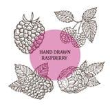 Hand drawn raspberry fruits Stock Photo
