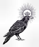 Hand drawn raven bird with crown illustration. Stock Photos