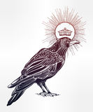 Hand drawn raven bird with crown illustration. Royalty Free Stock Photos