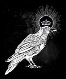 Hand drawn raven bird with crown illustration. Royalty Free Stock Image