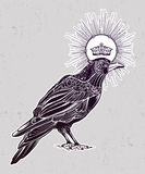 Hand drawn raven bird with crown illustration. Royalty Free Stock Photography