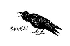 Hand drawn raven Stock Image