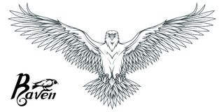 Hand drawn of the raven. Wild birds drawing. Raven logo. Vector graphics to design Stock Image