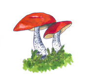 Hand drawn red-capped Mushrooms. Hand drawn sketch of Two Leccinum Mushrooms vector illustration