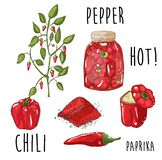 Hand drawn red peppers vector illustration