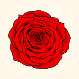 Hand-drawn red rose Stock Images