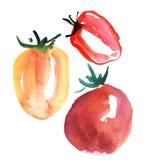 Hand drawn red tomato illustration vegetable Stock Image