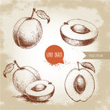 Hand drawn ripe apricots set  on vintage background Royalty Free Stock Photography