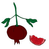 Hand drawn ripe pomegranate Stock Photos