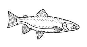 Hand drawn Roach fish