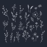 Hand drawn romantic flowers. Mono line vector floral collection. vector illustration
