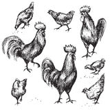 Hand drawn roosters and hens Stock Photo