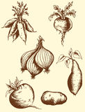 Hand drawn roots Stock Image