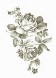 Hand drawn rose. Hand drawn Old-styled rose Stock Photo