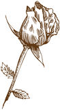 Hand Drawn Rose Stock Photography