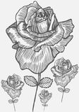 Hand Drawn Rose Stock Image