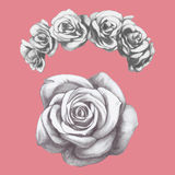 Hand drawn rose and floral wreath. Vector Royalty Free Stock Photos