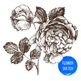 Hand drawn rose flower Stock Photo