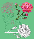 Hand drawn rose on green background Royalty Free Stock Photos