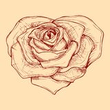 Hand drawn rose in the shape of heart vector illustration