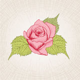 Hand Drawn Rose Stock Images