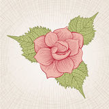 Hand Drawn Rose Royalty Free Stock Photos