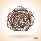 Hand drawn rose. Royalty Free Stock Photos