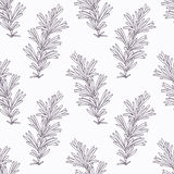 Hand drawn rosemary branch outline seamless Royalty Free Stock Photos