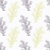 Hand drawn rosemary branch stylized Royalty Free Stock Images