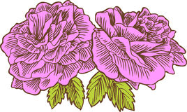 Hand Drawn Roses Stock Photography