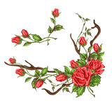 Hand drawn roses Stock Image