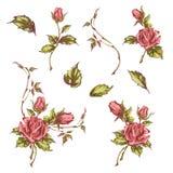 Hand drawn roses Royalty Free Stock Photo