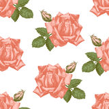 Hand drawn roses seamless Royalty Free Stock Photography